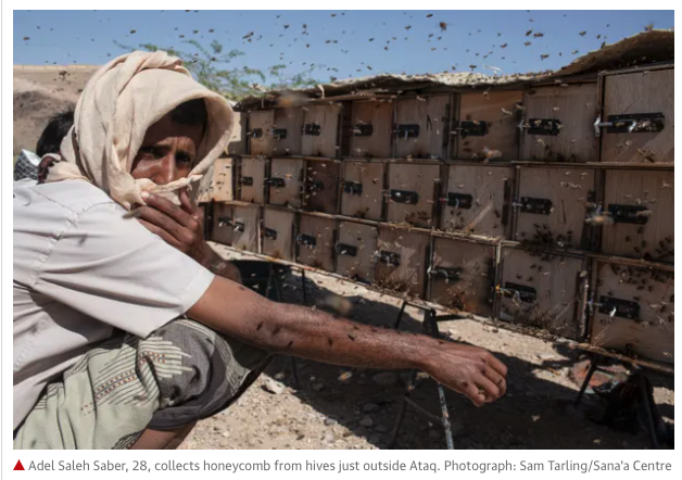 From The Guardian news, a picture depicting a Yemen beekeeper and his hives.